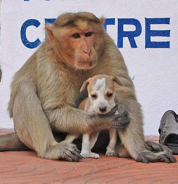 scimmia mamma8