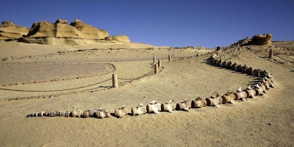 wadi al hitan museum cover