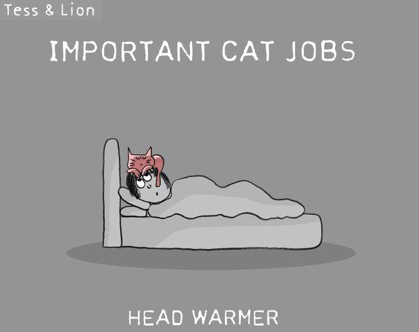 11. lavoro gatti