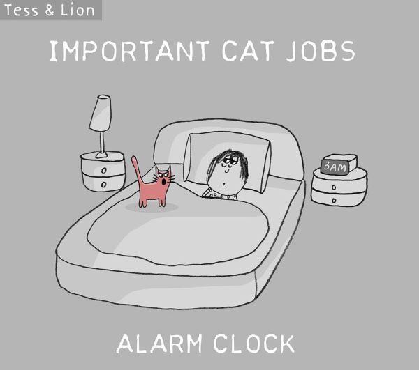 12. lavoro gatti