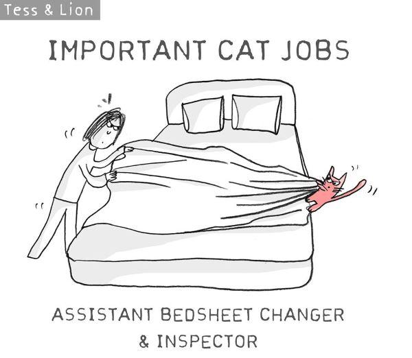 13. lavoro gatti