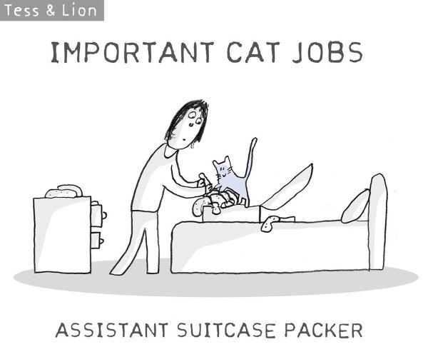 14. lavoro gatti