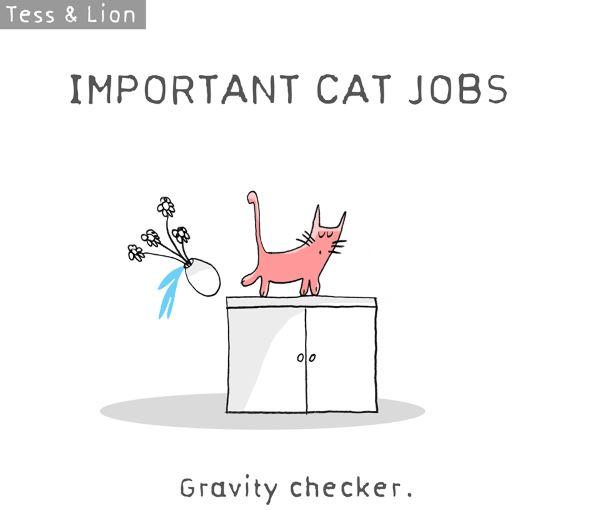 15. lavoro gatti