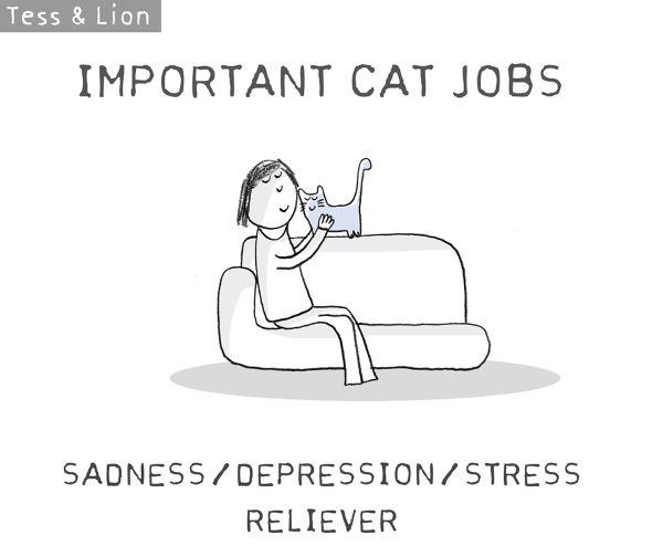 16. lavoro gatti
