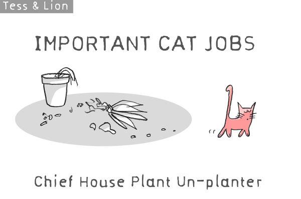 3. lavoro gatti
