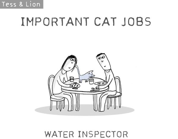 5. lavoro gatti
