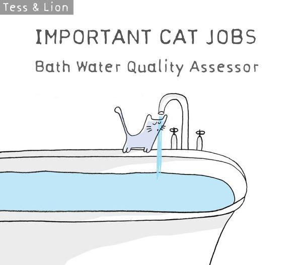 8. lavoro gatti