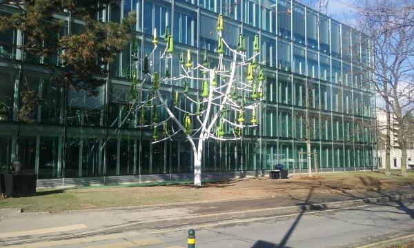 arbre vent ginevra7