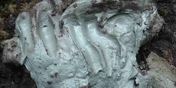 argilla canadese batteri