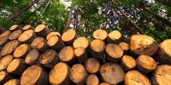 deforestazione albania