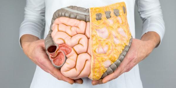 intestino integratori