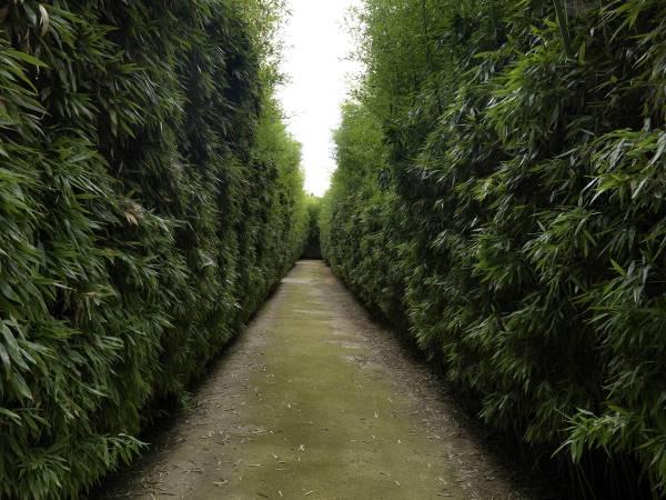 labirintomasone