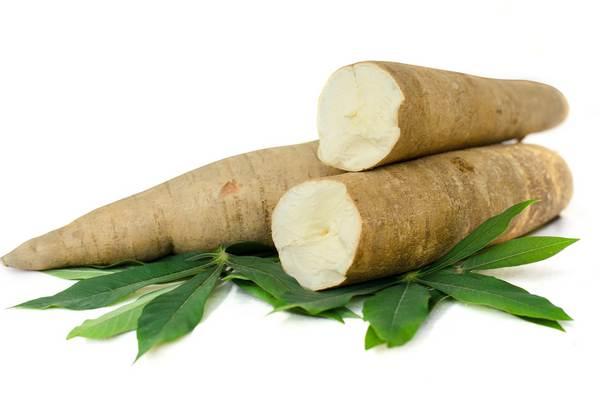 manioca tapioca