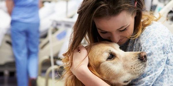 cane ospedale