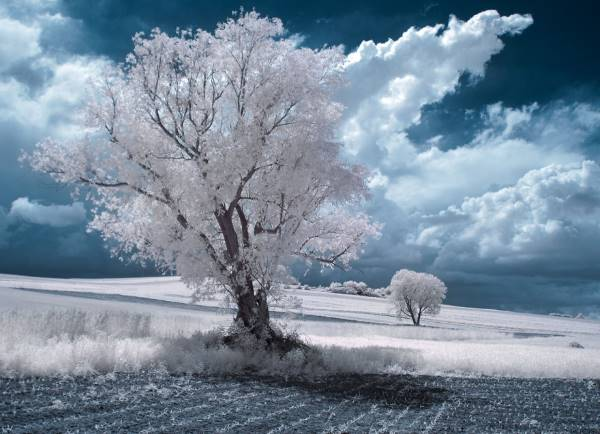 the majestic beauty of trees captured in infrared photography 11 880