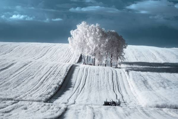 the majestic beauty of trees captured in infrared photography 2 880