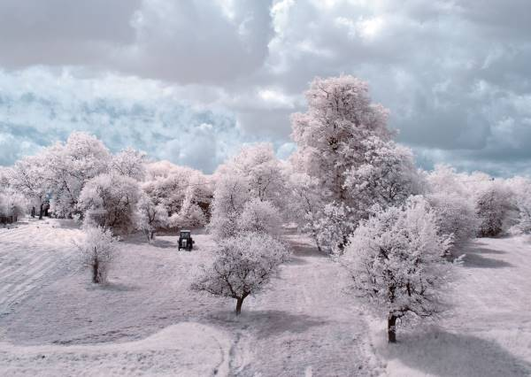 the majestic beauty of trees captured in infrared photography 3 880