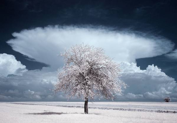 the majestic beauty of trees captured in infrared photography 4 880