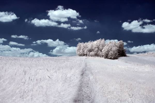 the majestic beauty of trees captured in infrared photography 6 880