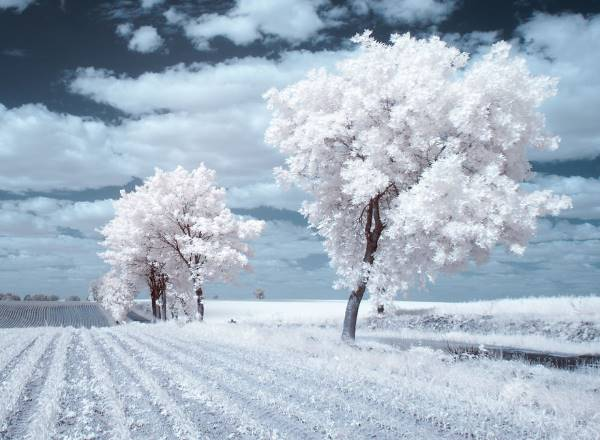 the majestic beauty of trees captured in infrared photography 7 880