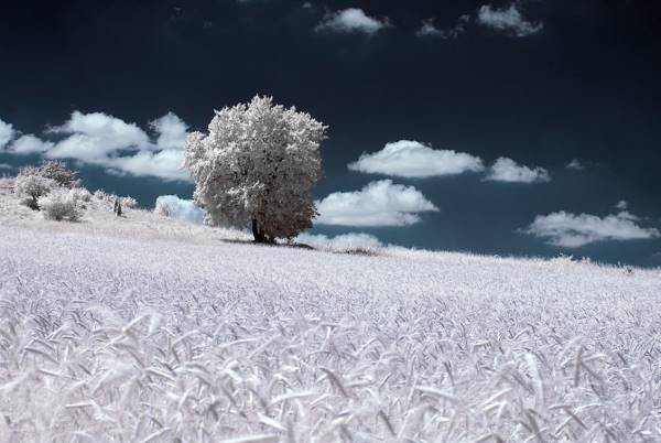 the majestic beauty of trees captured in infrared photography 8 880