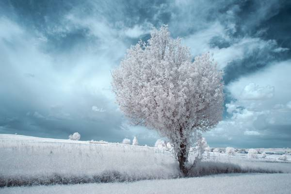 the majestic beauty of trees captured in infrared photography 9 880