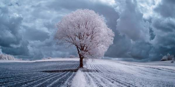 the majestic beauty of trees captured in infrared photography 880