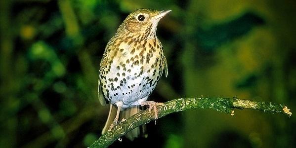 uccelli habitat