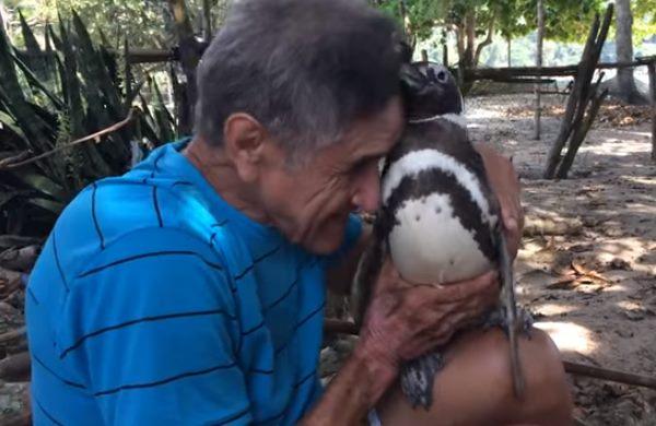Pinguino brasile4