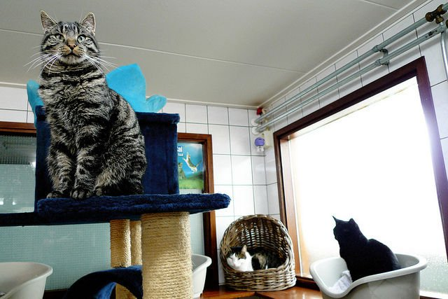 cat boat 1