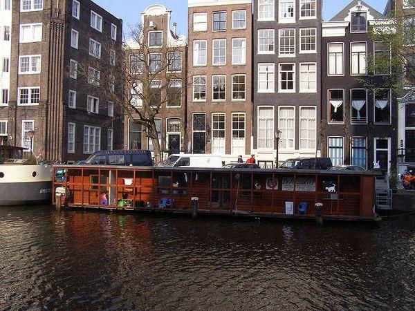 cat boat 2