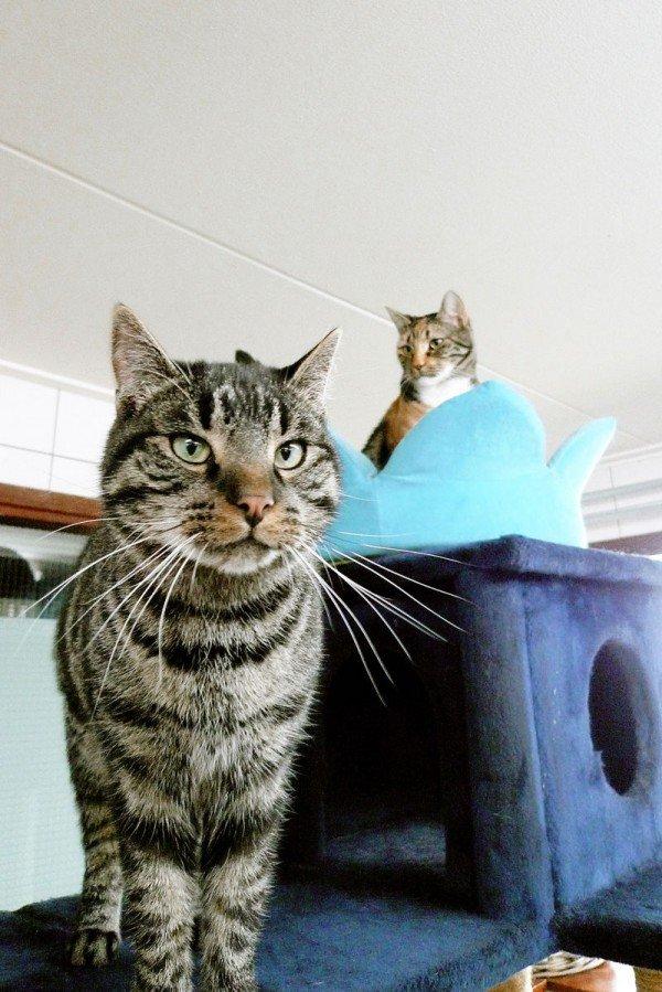 cat boat 4