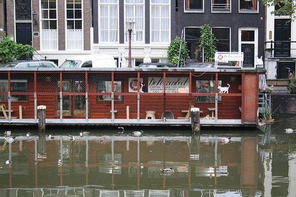 cat boat 5