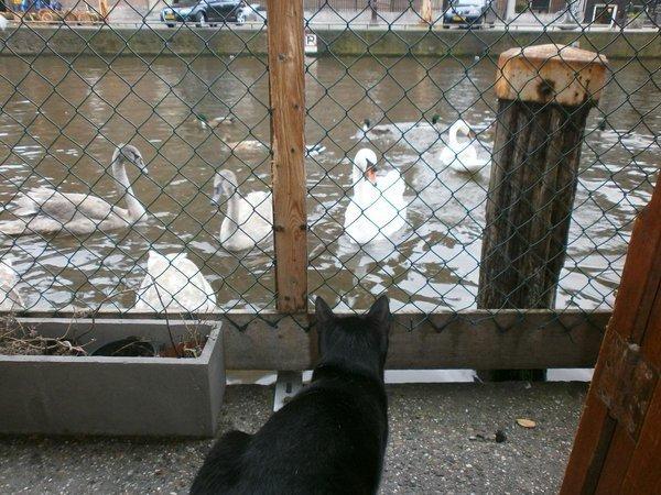 cat boat 6