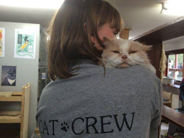 cat boat 7