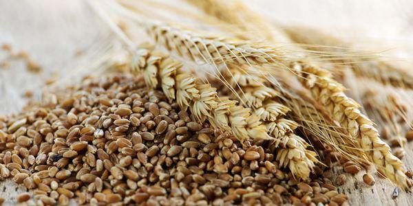 cereali alternativi
