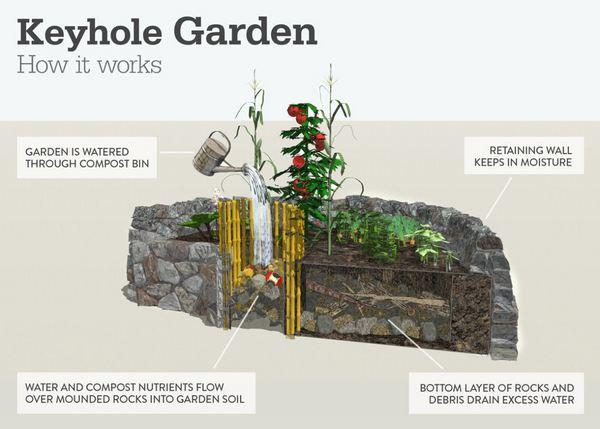 keyhole garden 4