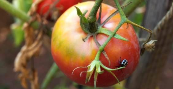 malattie piante sintomi rimedi