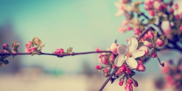 primavera2016