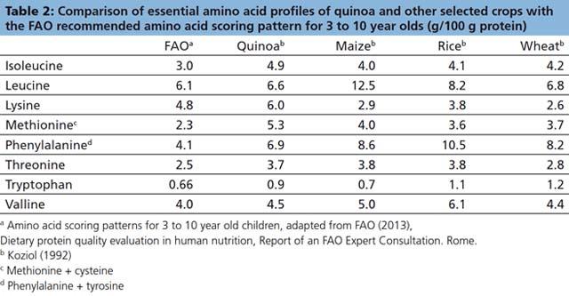 quinoa amminoacidi essenziali