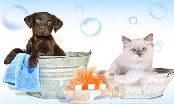 rimedi naturali cani gatti