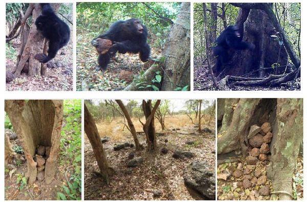 scimpanze alberi sassi religione 1
