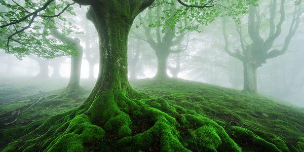 vita nei boschi thoreau