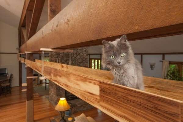 11. casa gatti