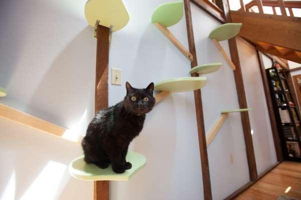 12. casa gatti