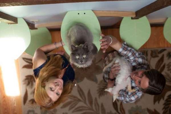 13. casa gatti