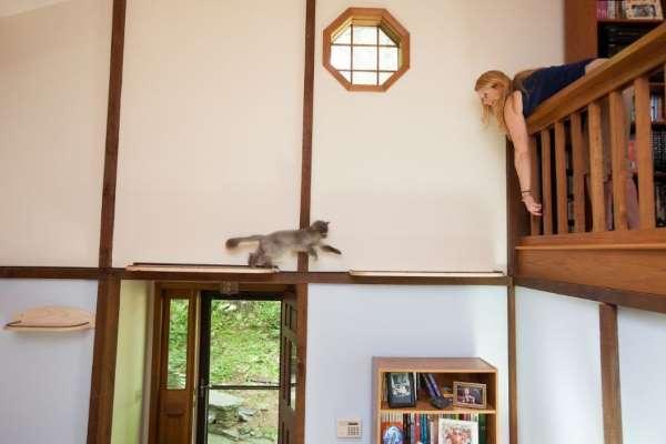 16. casa gatti