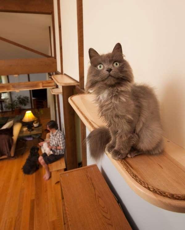 17. casa gatti