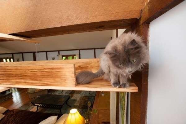 18. casa gatti