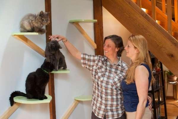 2. casa gatti